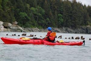 Channel Islands Kayak & Wildlife Experience