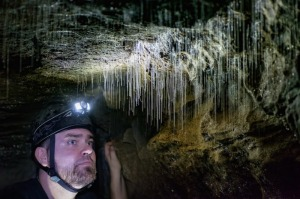 Up close with glowworms