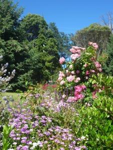 'Pink' garden, Grey Sands