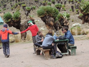 Climbing Mount Kenya organised for adventure Trekking Mt Kenya, hiking,Mount Kenya routes, best months,walking,climbing gears all inclusive prices. Mount Kenya Climbing, Trekking, Hiking Adventures guided by YHA Travel Kenya https://www.yhakenyatraveltoursandsafaris.com/pages/climbing-mount-kenya.html.