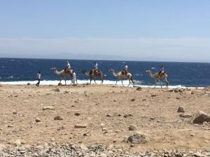Abu Galum safari in Dahab