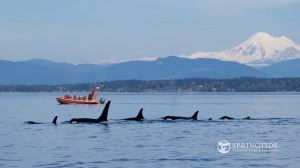 SpringTide Whale Watching & Eco Tours