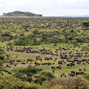 Welcome to the greatest show on Earth this year  Migration season. Enjoy an all inclusive Kenya wildebeest migration safari in Masai Mara as you witness the mass migration of wildlife, animals, in the world seven wonders, best time to watch. https://www.yhakenyatraveltoursandsafaris.com/pages/kenya-wildebeest-migration-safari.html