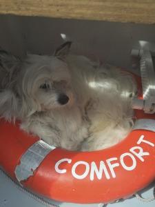 Relaxing onboard