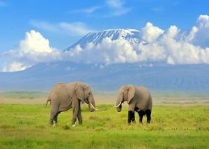 Amboseli Tours