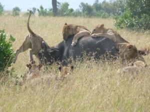 Adventures in Masai Mara
