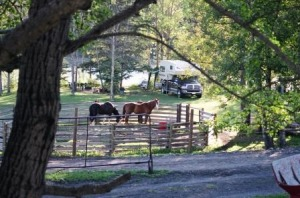 Guest Horses Holding Corral