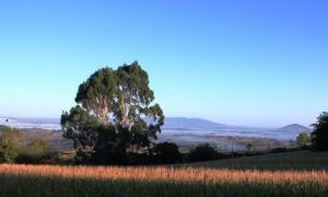 Views west from Kamahi Cottage