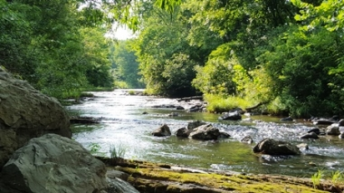 Trout Stream - Mill Creek