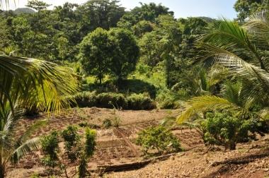 7 acre organic farm