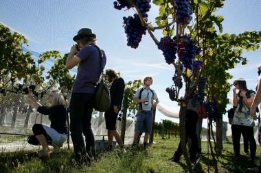 Wines Amongst the VInes
