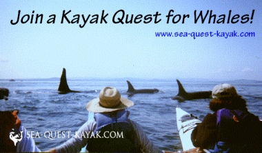 Join a Kayak Quest for Whales Today! Sea Quest Kayak Tours www.sea-quest-kayak.com