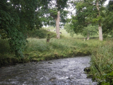 River Swale Fly Fishing