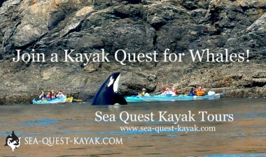 Sea Quest Kayak Tours