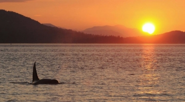 sunset whale watching