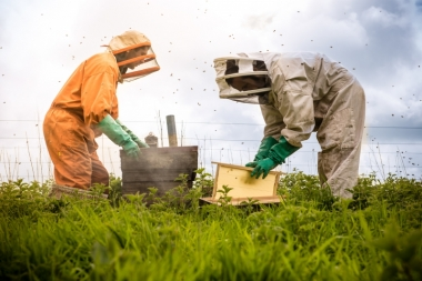 Our beekeepers
