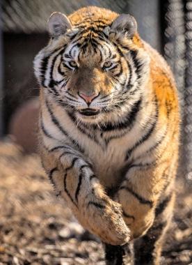 Jungle Cat World Wildlife Park