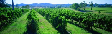 Albert River Vineyard