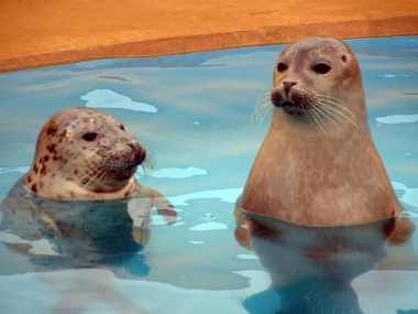 Rescued seals