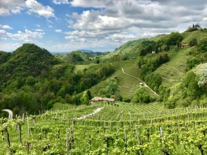 Prosecco day tour