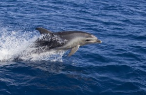 On your journey well most likely come across a friendly dolphin or 2